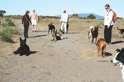 Dogs and their caretakers at the Albany Bulb. Photograph by Jill Posener.