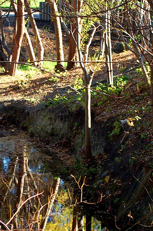 Barebanks: No more stream-cooling understory.