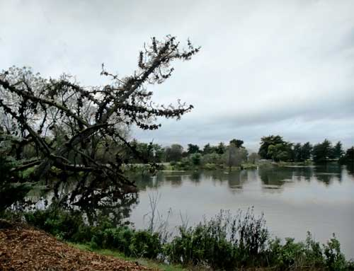 View of the lagoon at Berkeley's Aquatic Park