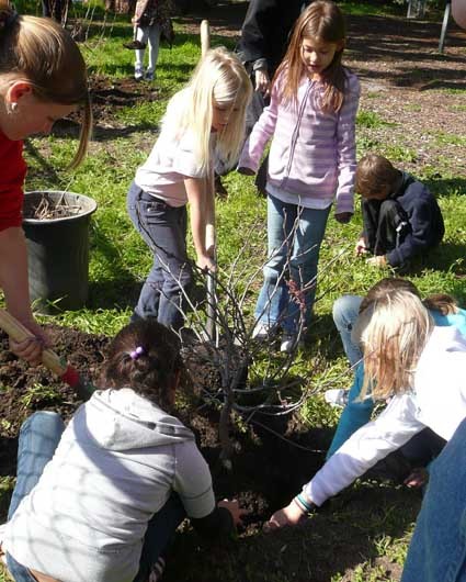 Berkeley celebrated its first day as Tree City USA by planting 13 trees in and around Thousand Oaks Elementary School in North Berkeley.