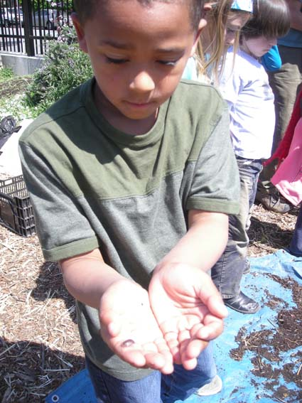 A first grader shows off a roly-poly he found in the compost heap.