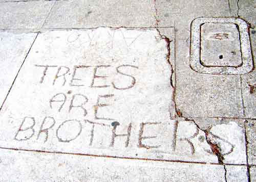 "Impermanence is the fate of the urban graffiti artist. Most of the time. But keep your eyes on the sidewalk as you walk south past Venus on the east side of Shattuck. Within a few blocks, you may spy a message that proclaims: ""Trees Are Brothers."" This message, scratched into sidewalk cement more than ten years ago has outlasted many storms. Unlike most graffiti, this is a memento was built to last."