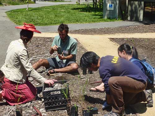 Student David Pon (right) led volunteers in planting natives in the demonstration plot behind Giannini Hall.