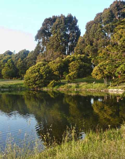 Today, Aquatic Park retains its tranquil lagoons, but is much more wooded than it was in 1937.