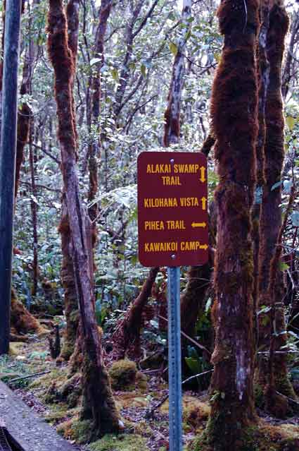Crossroads in the Alaka'i Swamp, Kaua'i.