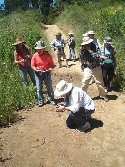 "The group pauses to photograph a black and red Lorquin's Admiral (near the curved stick on the ground, lower left).  It was ""puddling""—drawing up minerals from damp soil—along one of the trails."
