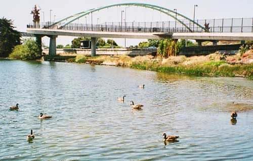 Canada Geese occupy Aquatic Park