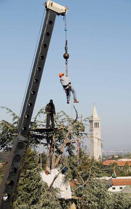 UC Berkeley Police raided the Memorial Stadium grove tree-sit Tuesday morning, cutting down the lines that linked trees and removing equipment used by the activists who are protesting the planned axing of the collection of Coastal Live Oaks and other trees to make way for a four-level high tech gym and office complex. A Daily Planet reporter was shoved in the back by one officer after he had been ordered away from the stadium rim, the only place offering a clear view of the activities below. The same officer confronted Doug Buckwald, a supporter of the tree-sitters. The stadium rim, as well as the sidewalk in front of the grove on Gayley Road, had been declared crime scenes, police said. A large crowd had gathered, thanks to phone calls and emails sent by supporters of the protest. An Alameda County Superior Court judge is expected to rule Wednesday on a lawsuit that has challenged the gym and other projects planned in the southeast area of the campus.