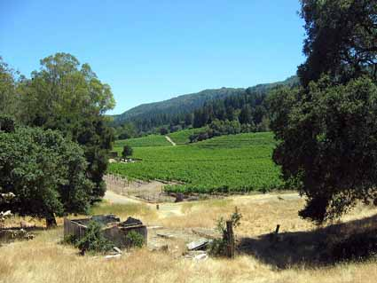 The lava-terraced Beauty Ranch vineyards are now cultivated by the Kenwood  winery, which produces the Jack London Series with a wolf's head label.