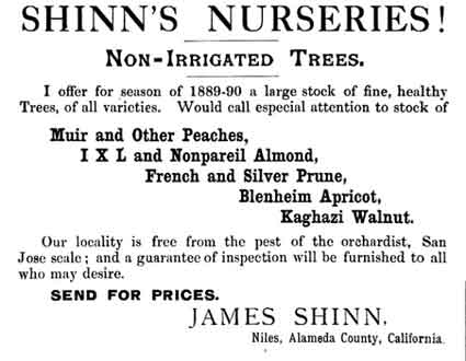 An advertisement by James Shinn in the July-December 1889 <u>Overland Monthly</u>—which his daughter, Millicent, owned and published—highlights the fruit and nut trees he had available for sale from the Niles property.