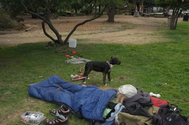 What U.C. cop might have seen the night of the dog slaying, except that it was after midnight and the dead dog's owner was passed-out drunk, reportedly without a sleeping bag--untethered leash.