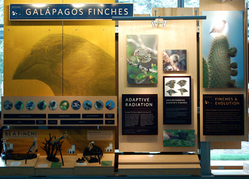 Good, informative expositional display: Darwin's finches.