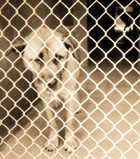 Trying conditions at the city's animal shelter have prompted a city 