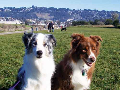 A pair of unleashed pooches take in the fine weather at Point Isabel.