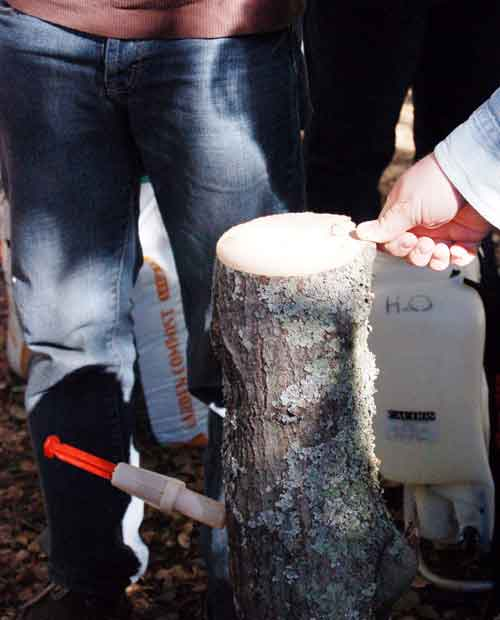 A spring-loaded tree injector forces solution into a fresh log at Matteo Garbelotto's October SOD workshop.
