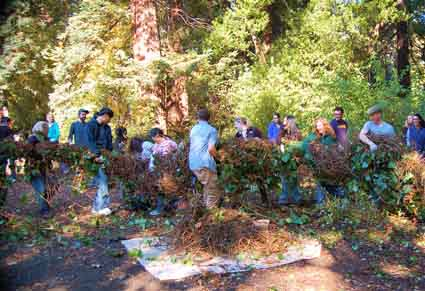 UC students wrestle invasive ivy into submission.