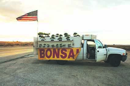 Bonsais for sale by the roadside beneath an American flag.