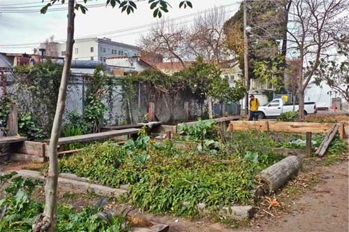 Park volunteer gardens survive drug laws-enforcement cut-back. Is that Remy's, the park's number one fan restaurant?